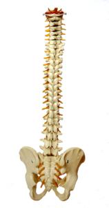 spine-957249_1280